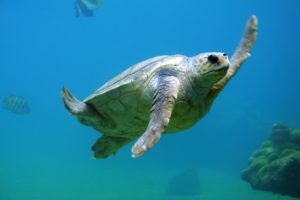Is Playa del Carmen Safe Sea Turtle